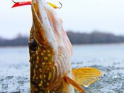 Фотоконкурс «Рыбалка. Зима - 2015»